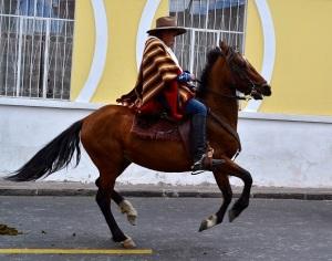 horse30